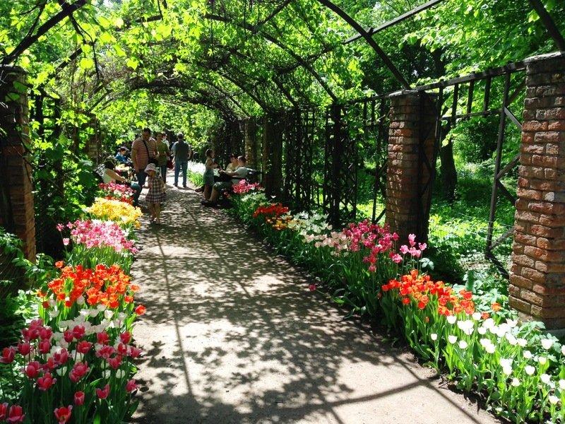 XVВесенний фестиваль цветов в«Аптекарском огороде»
