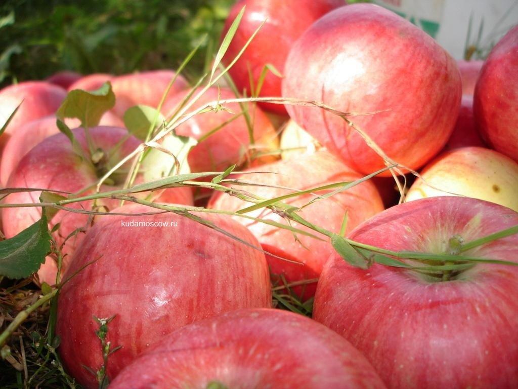«Яблочный спас» наВДНХ