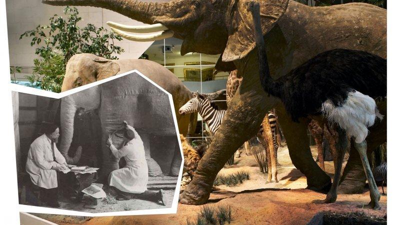 Выставка «Тайны Дарвиновского музея»