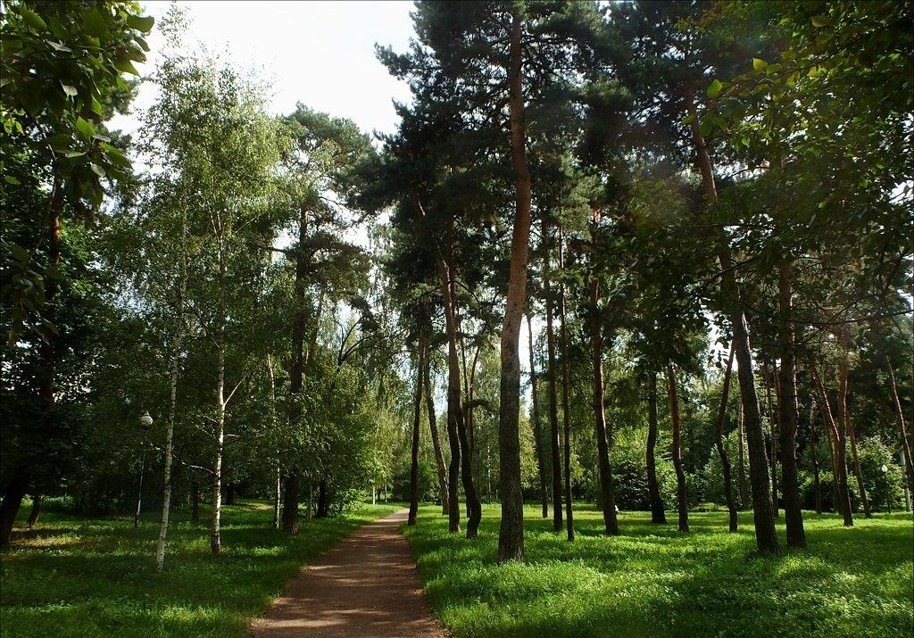 Парк «Березовая роща»