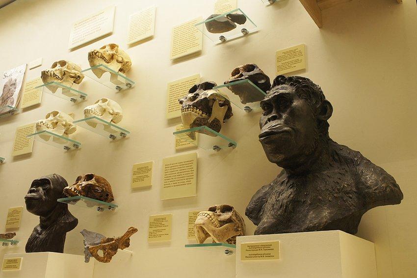 Выставка «Превращение вчеловека»