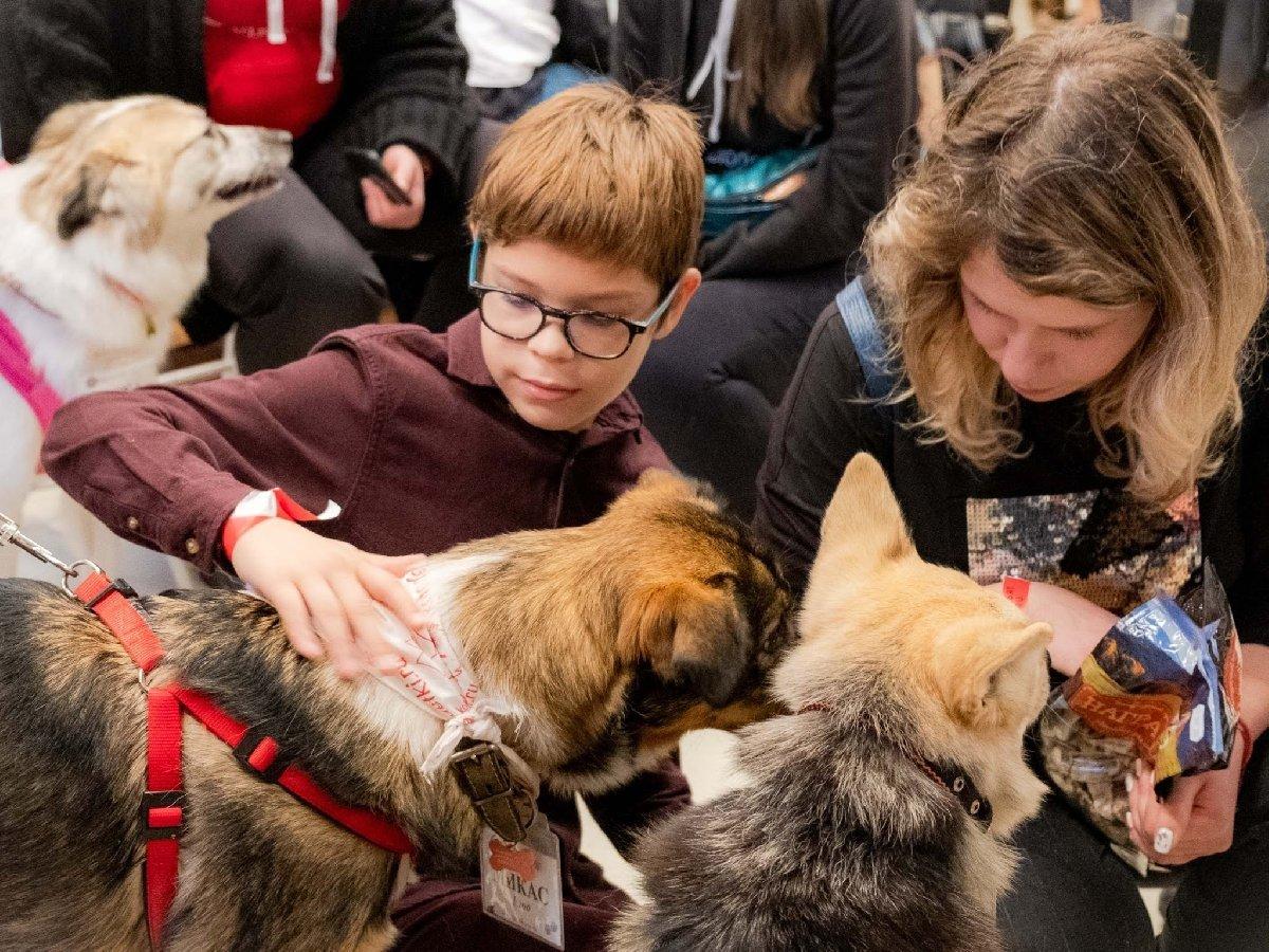 Благотворительный онлайн— фестиваль «Собаки, которые любят» 2020