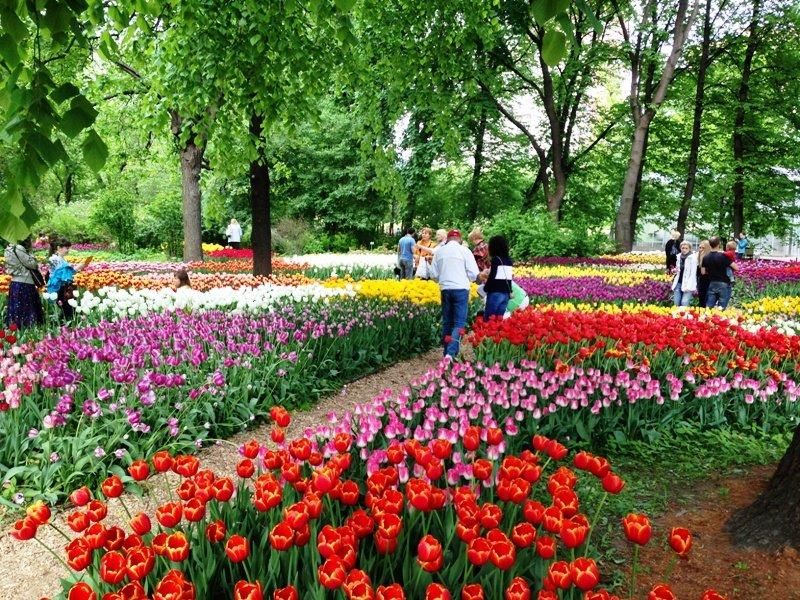 Весенний фестиваль цветов в«Аптекарском огороде» 2018