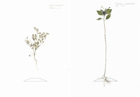 Выставка «Только бумага. Илья Долгов»
