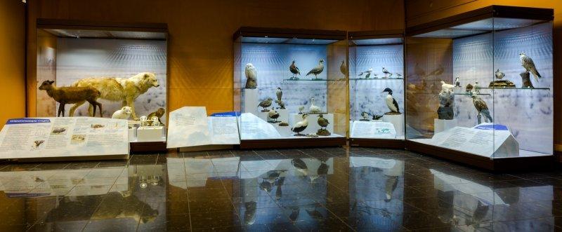 Выставка «Жизнь среди снега ильда»