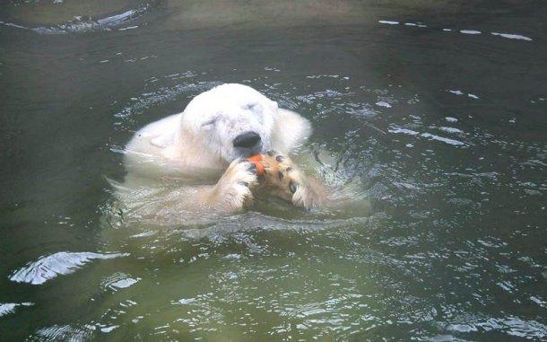 День города вМосковском зоопарке 2016