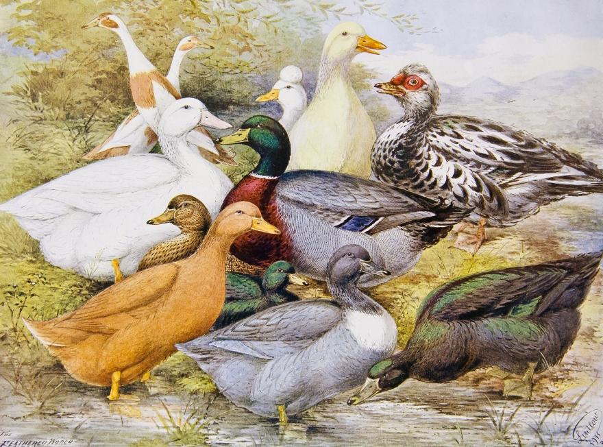 Выставка «Птичник вусадьбе XIX— начала ХХвеков»