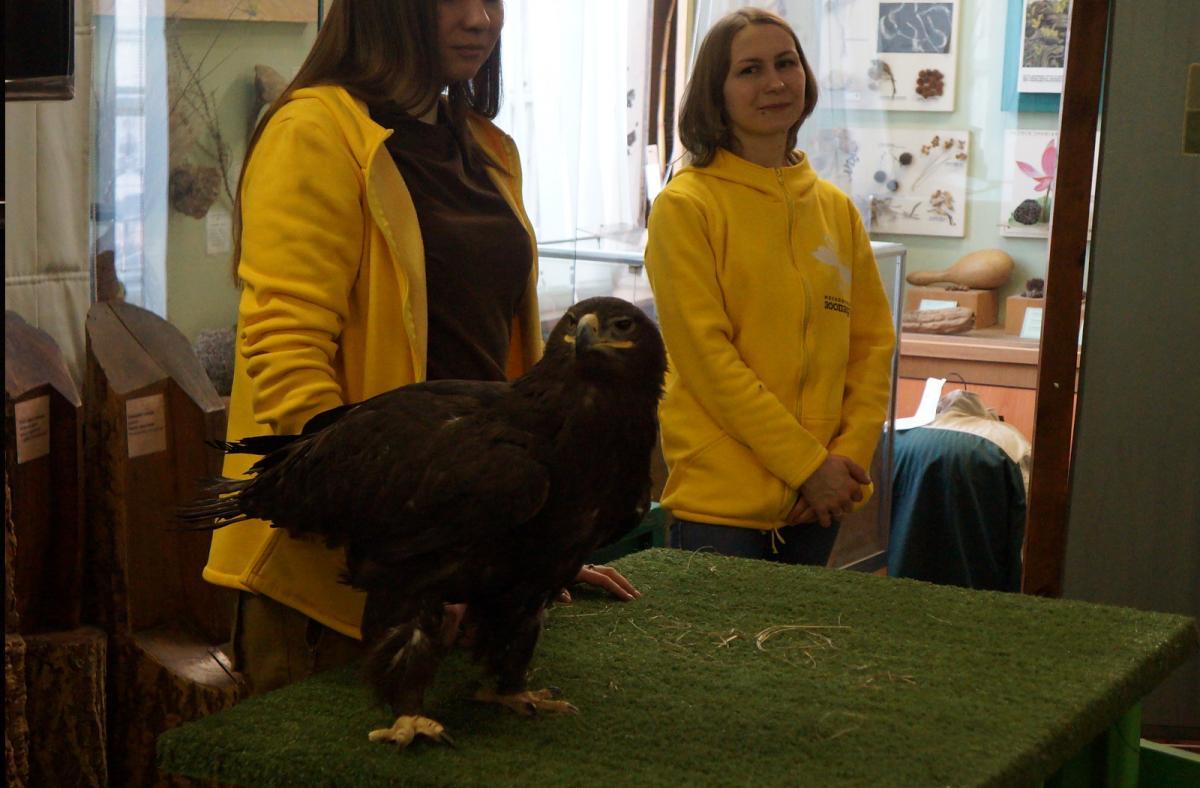 День птиц вБиологическом музее 2019