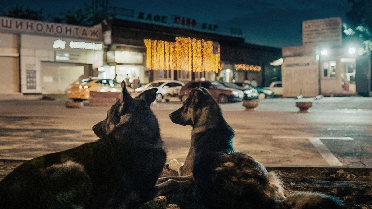 Фестиваль «Новое кино Австрии» 2020