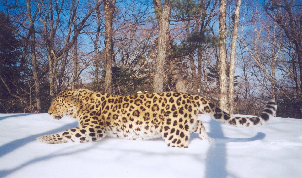 Всемирный день защиты животных вДарвиновском музее 2017