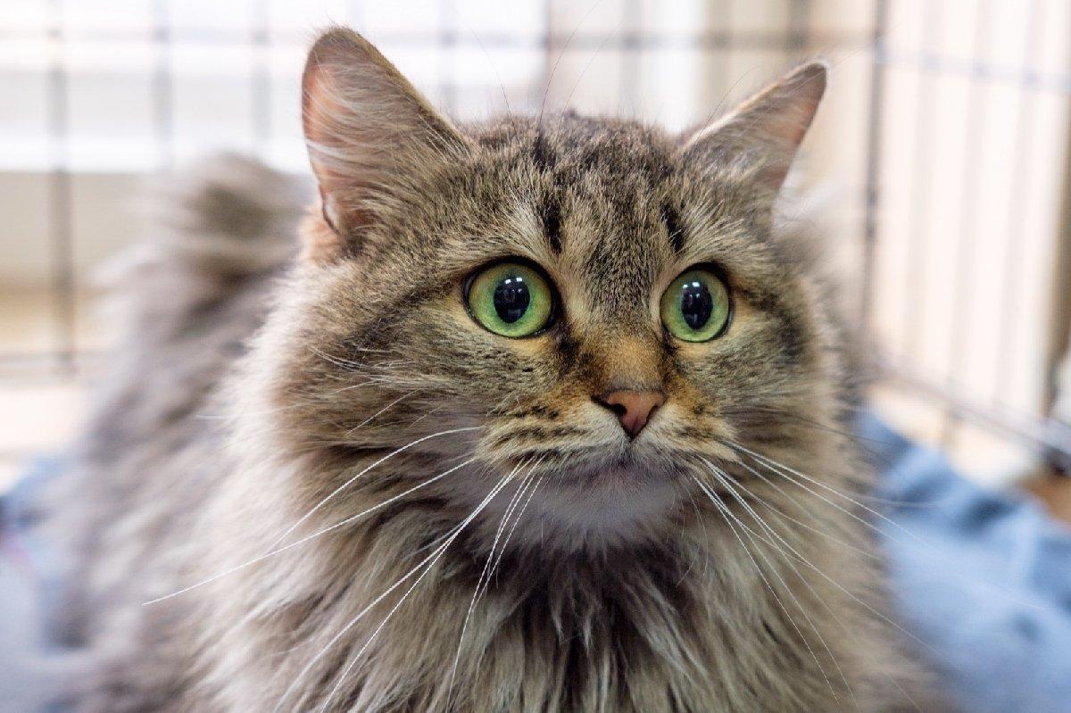 Выставка кошек «Неслучайная встреча»