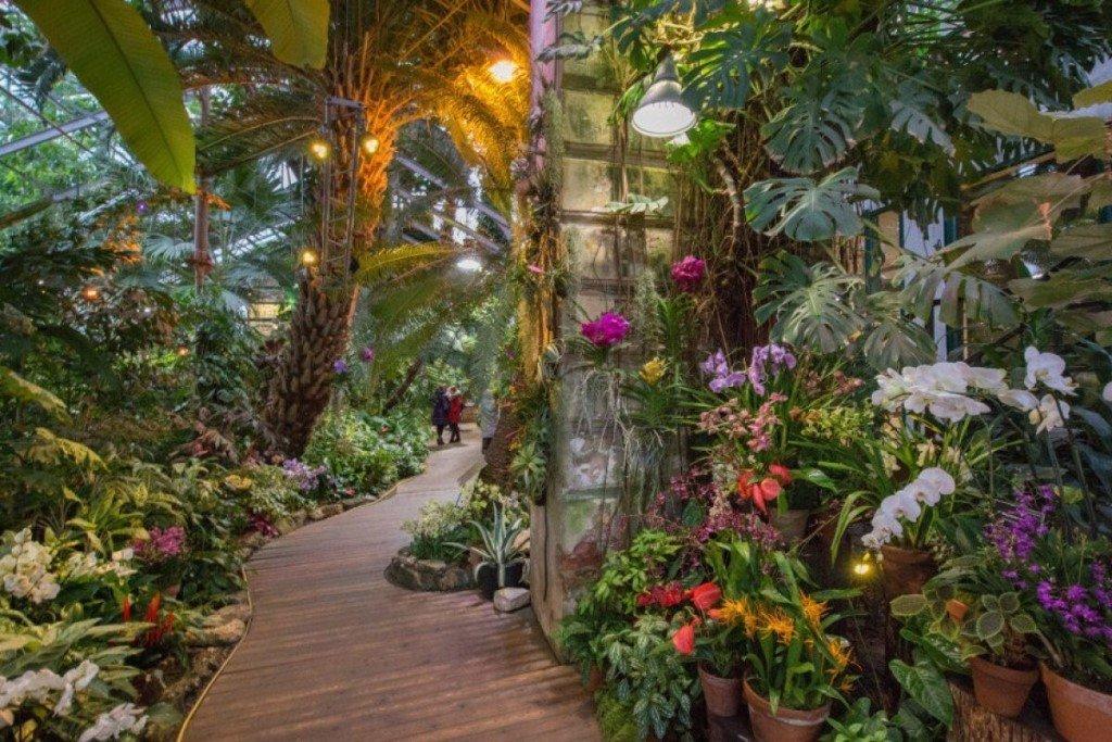 Тропическая оранжерея в Ботаническом саду