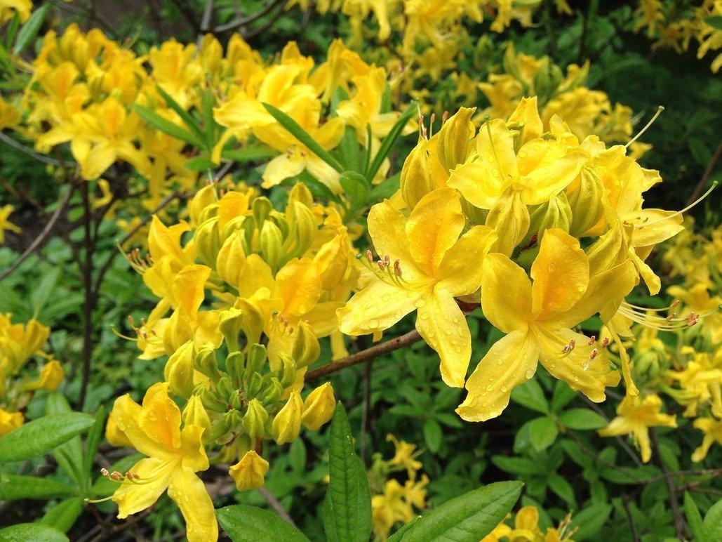 XVII Весенний фестиваль цветов в«Аптекарском огороде»