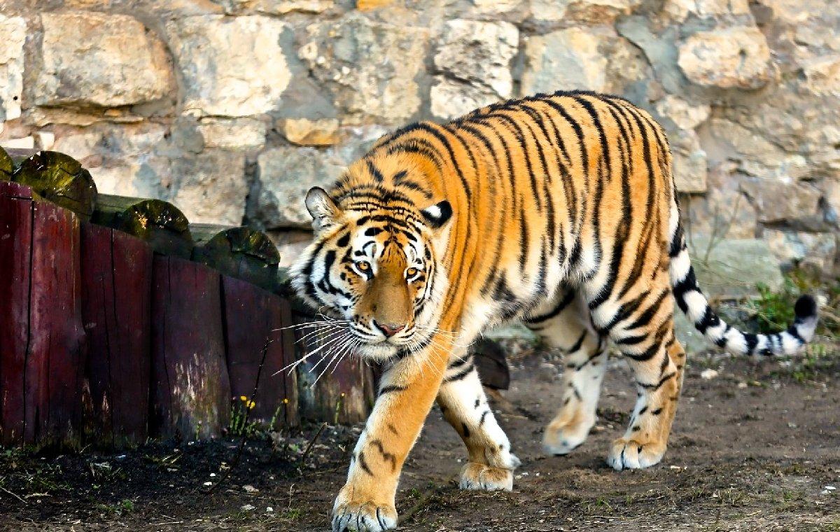 Открытие летнего сезона вМосковском зоопарке 2019
