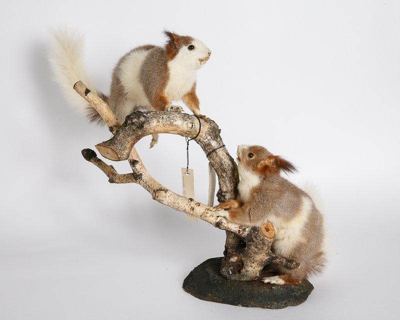 Выставка «Обыкновенные необыкновенные звери»