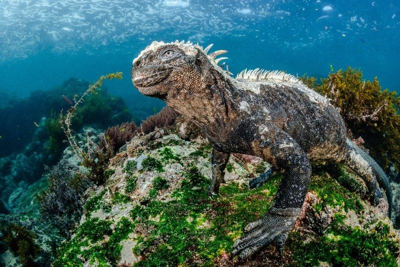 Фестиваль подводной фотографии «Дикий подводный мир» 2019