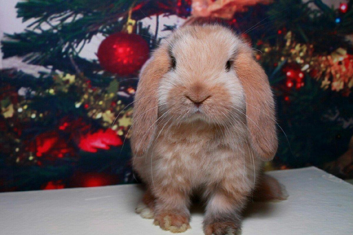 Выставка декоративных кроликов вБиологическом музее 2020