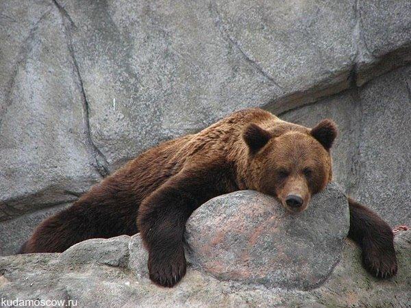 Ночь вМосковском зоопарке