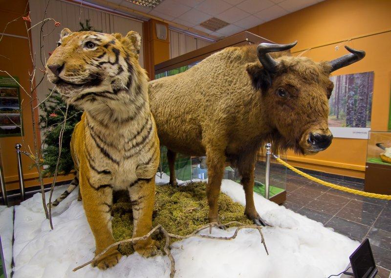 Выставка «Животные накарте России»
