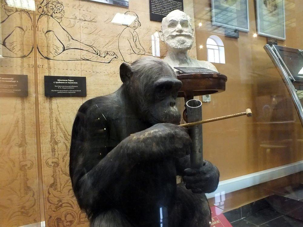 Выставка «Эволюция: торжество идеи»