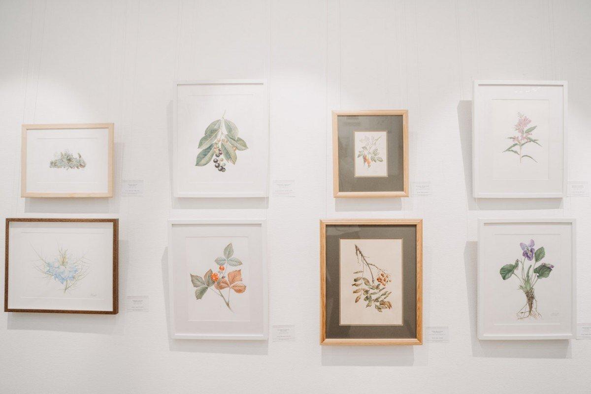 Выставка «Оживший цветок Панацеи. Лекарственные растения мира»