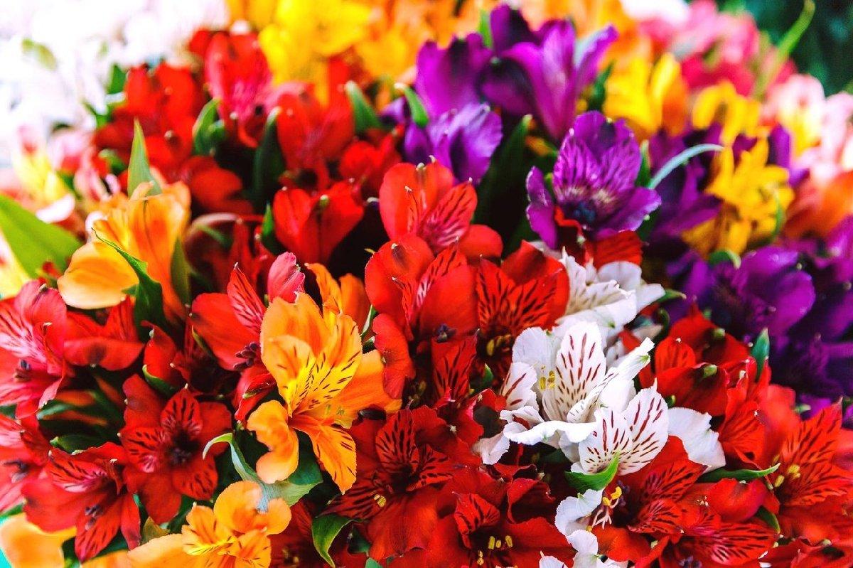 Международная выставка «Цветы/Flowers— 2017»