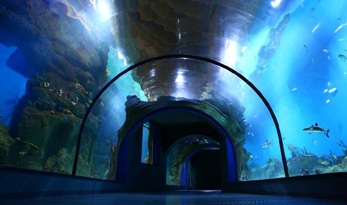 Центр океанографии иморской биологии «Москвариум»