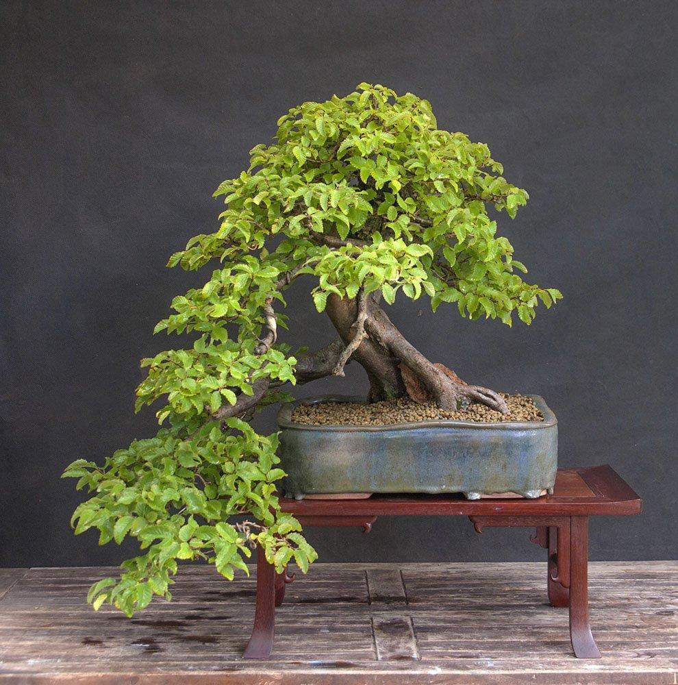 Выставка «Бонсай— миниатюрные пейзажи изживых российских деревьев»