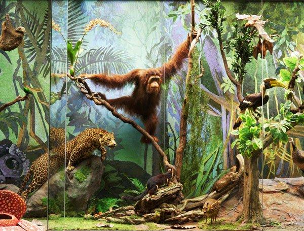 «День древнего человека» вДарвиновском музее