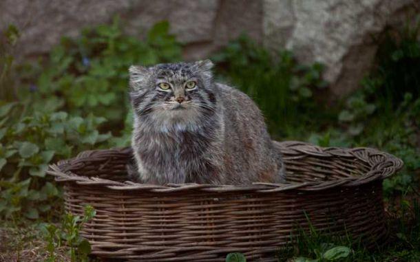 Международный день кошек взоопарке 2017