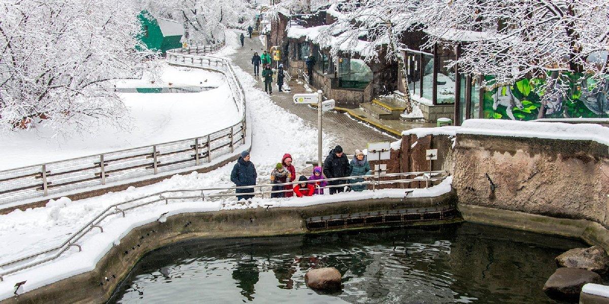 Новогодние праздники вМосковском зоопарке 2019/20