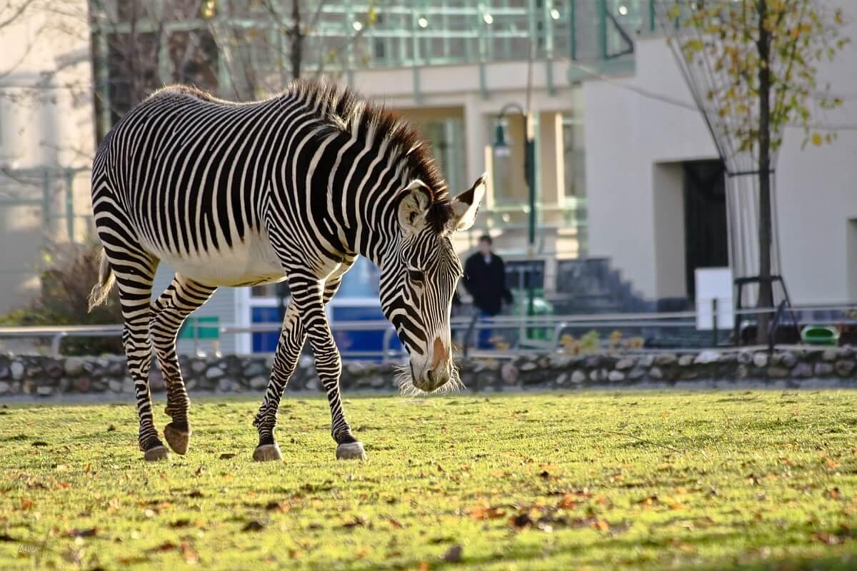Открытие Московского зоопарка 2020