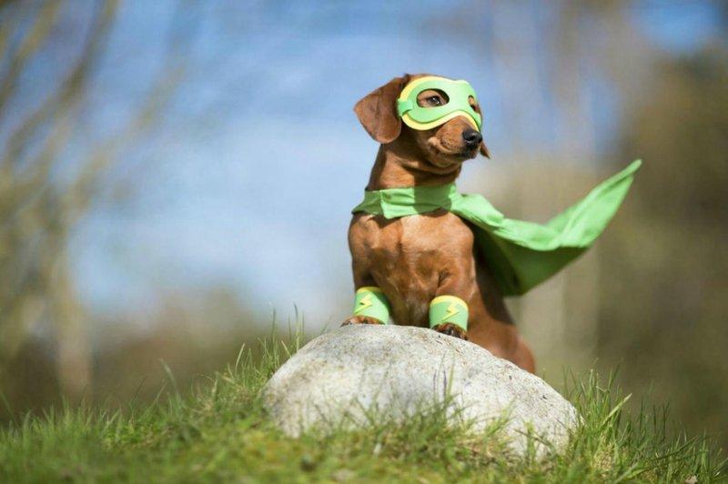 Фестиваль «Мой пес– супергерой!» 2020