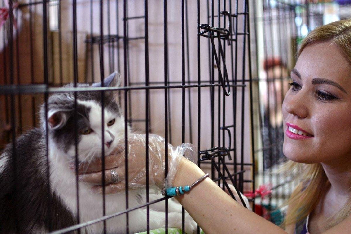 Дни открытых дверей вприютах для кошек исобак 2018