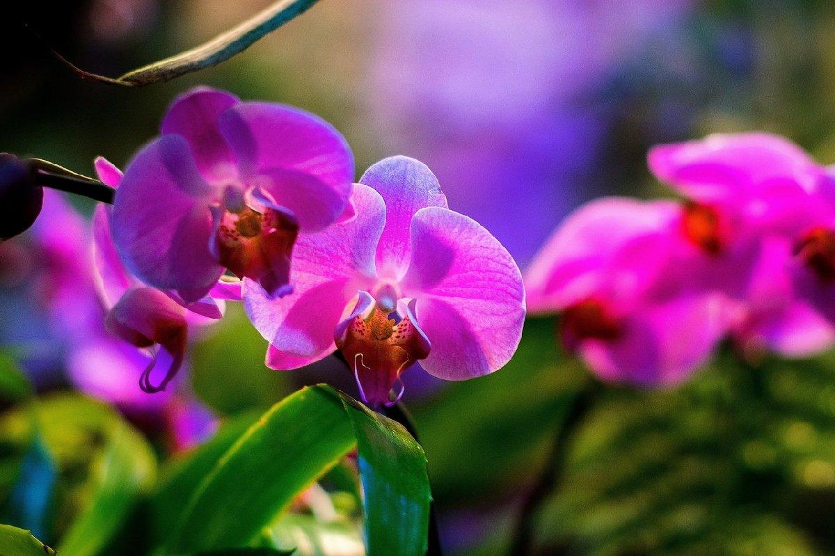 Выставка орхидей в«Аптекарском огороде» 2021