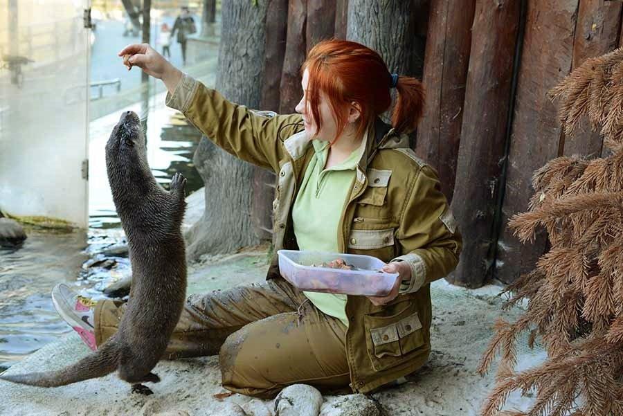 День всех влюбленных вМосковском зоопарке 2019