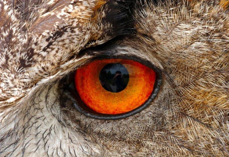 Выставка «Глаз: эволюция сложного органа»