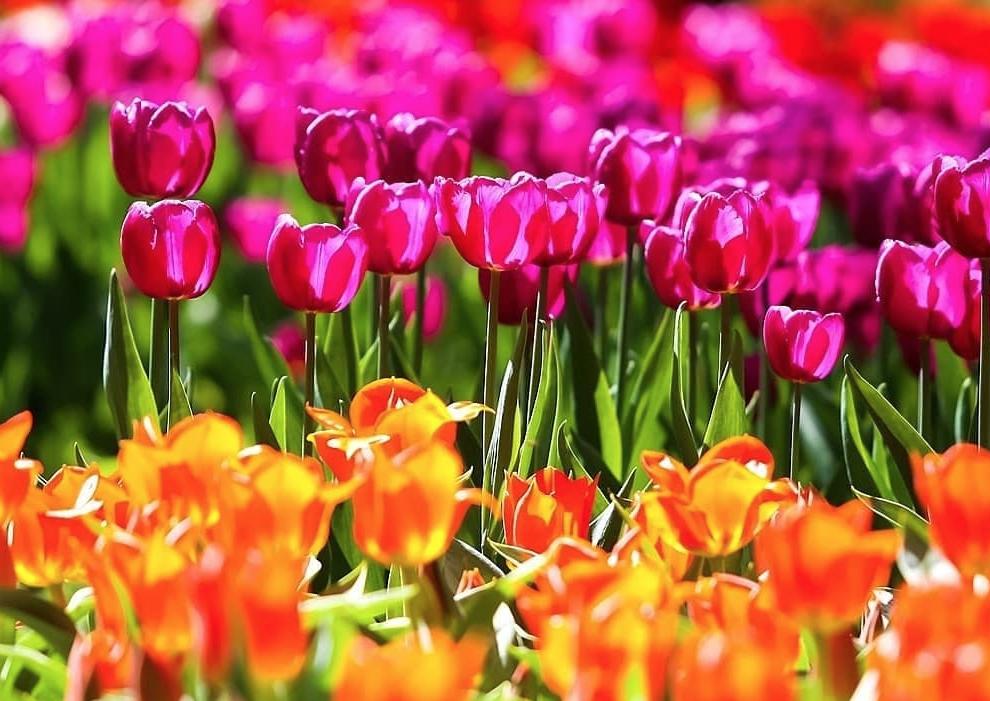 Весенний фестиваль цветов в«Аптекарском огороде» 2021