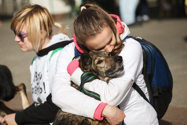 Выставка бездомных собак икошек «Надо брать! Осенью!» 2017