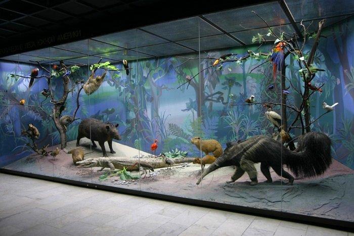 День рождения Дарвиновского музея 2018