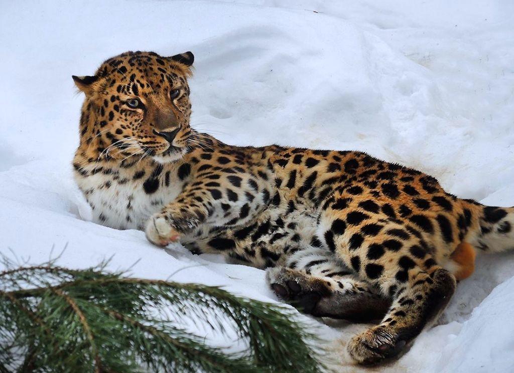 Всемирный день экскурсовода вМосковском зоопарке 2019