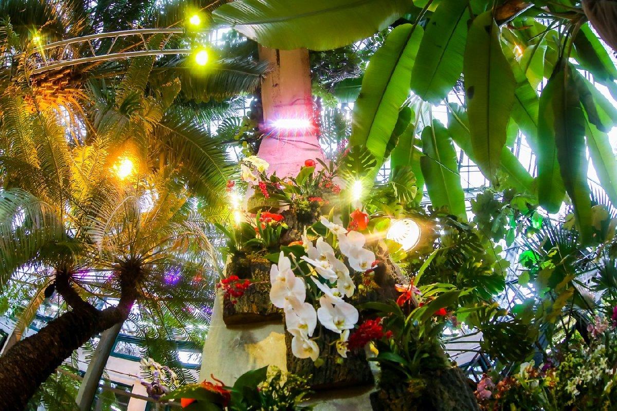 Фестиваль орхидей, хищных растений исуккулентов «Тропическая зима» 2019/20