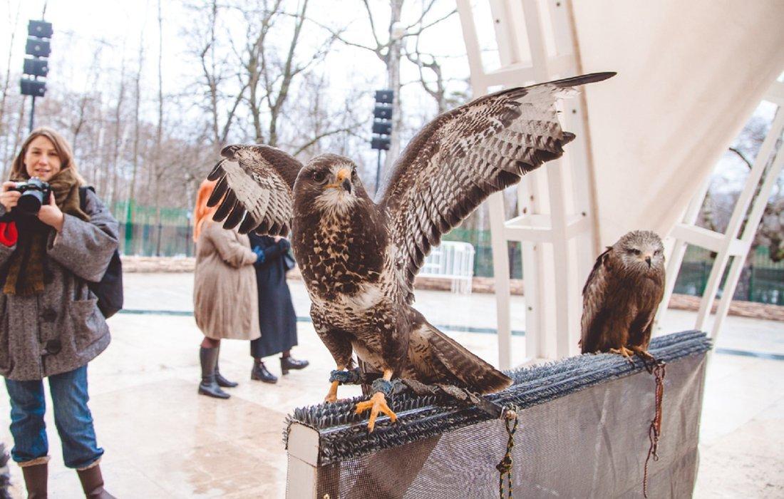Международный день птиц впарке «Сокольники» 2018