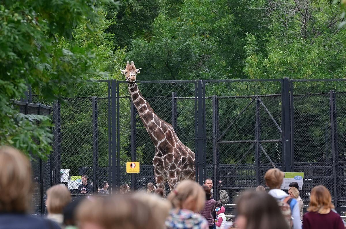 День города вМосковском зоопарке 2017