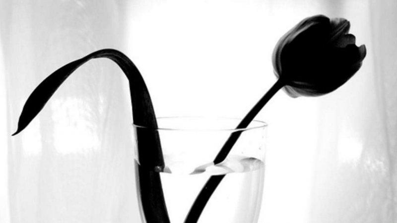 Выставка «Черное/Белое: парадоксальные цвета»