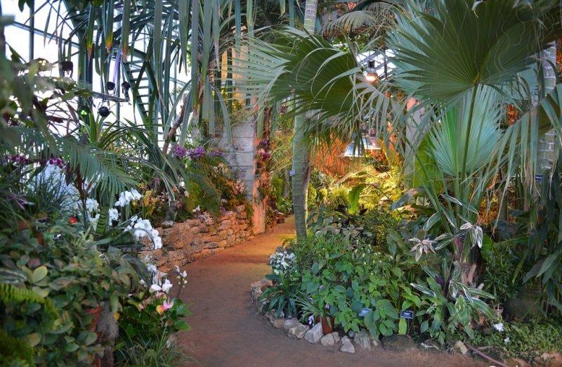 Картинки по запросу Ботанический сад МГУ