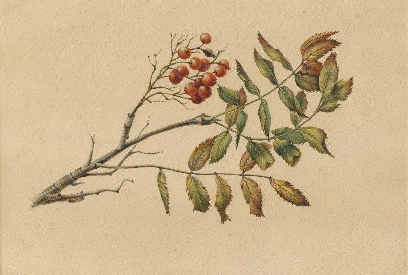 Выставка «Исчезающая красота. Растения «Красной книги»
