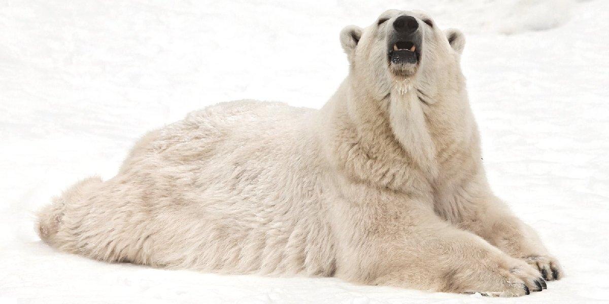 День полярного медведя вМосковском зоопарке 2019