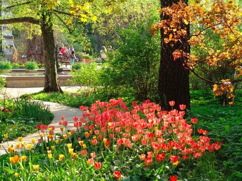 сад огород цветы